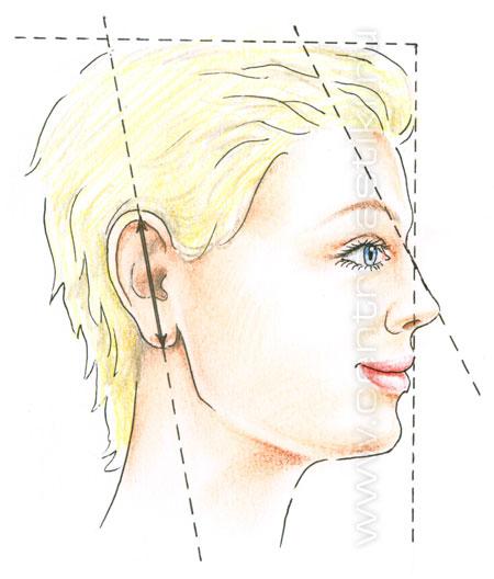 Идеальные пропорции ушей