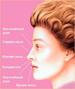 идеальная форма носа
