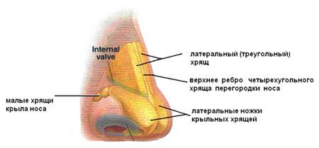 Искривление носовой перегородки. Санкт-Петербург