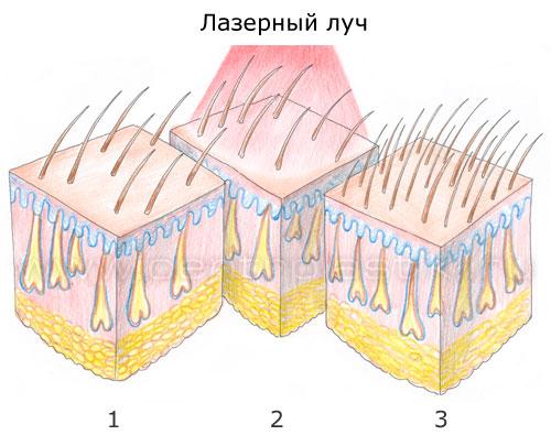 как на волосы влияют витамины группы б